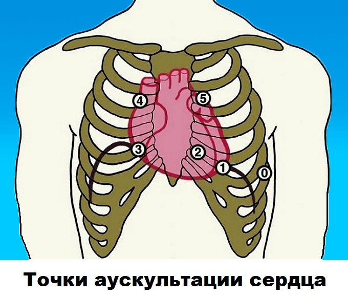 Точки аускультации сердца