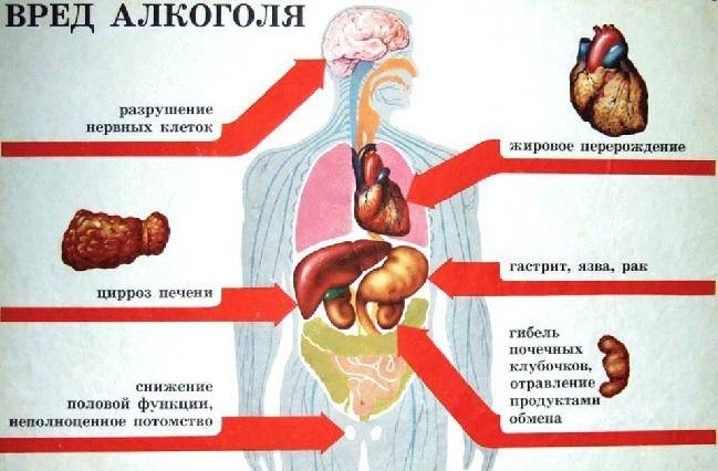 Воздействие алкоголя на организм при его избыточном употреблении