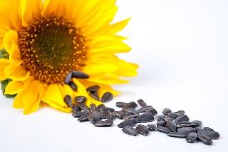 Семена подсолнечника при гипертонии
