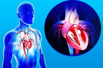 Диагностика сердца пациента