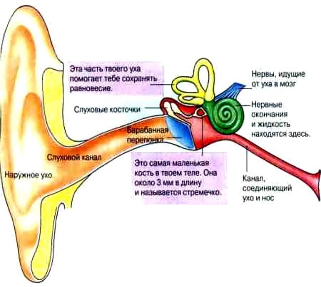 Симптом сердцебиения в ушах