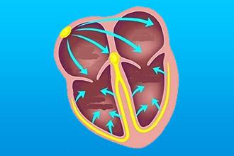 Что такое замирание сердца