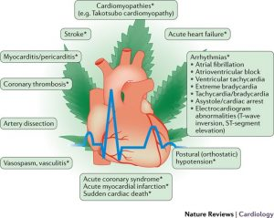 Marijuana and heart